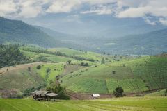 Il paesaggio coltiva il riso Fotografie Stock