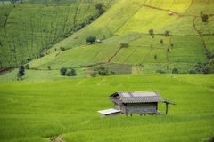 Il paesaggio coltiva il riso Fotografie Stock Libere da Diritti