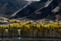 Il paesaggio del atumn del plateau di Xinduqiao Fotografia Stock Libera da Diritti