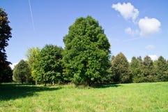 Il paesaggio del parco in Bielorussia Fotografia Stock Libera da Diritti