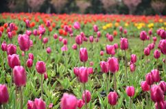 Il paesaggio del supporto di Tianping a Suzhou, Cina in primavera immagine stock libera da diritti