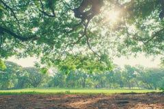 Il paesaggio dell'albero Fotografia Stock