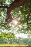 Il paesaggio dell'albero Immagine Stock