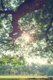 Il paesaggio dell'albero Fotografia Stock Libera da Diritti