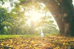 Il paesaggio dell'albero Immagine Stock Libera da Diritti