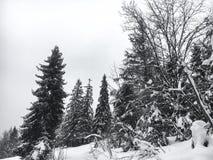 Il paesaggio dell'inverno nella foresta di conifere ha abbandonato la vecchia casa di legno, la capanna del ` s del silvicoltore  Fotografie Stock Libere da Diritti