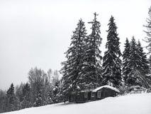 Il paesaggio dell'inverno nella foresta di conifere ha abbandonato la vecchia casa di legno, la capanna del ` s del silvicoltore  Fotografia Stock