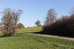 il paesaggio della campagna di autunno con deadfallen gli alberi ed il cielo blu Immagini Stock Libere da Diritti