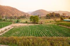 Il paesaggio della fragola fresca fruttifica azienda agricola e fila della fragola Immagine Stock Libera da Diritti
