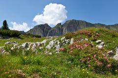 Il paesaggio della montagna con alpino è aumentato Immagine Stock Libera da Diritti