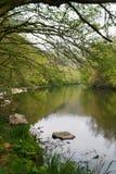 Il paesaggio della primavera con i giovani va sugli alberi di mattina al fiume dopo pioggia Immagini Stock