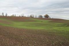 Il paesaggio di autunno con grano verde germoglia sul campo dell'agricoltura Fotografie Stock Libere da Diritti