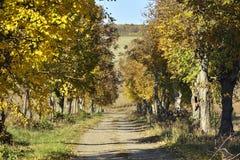 Il paesaggio di autunno con la strada immagini stock libere da diritti