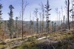 Il paesaggio di autunno della montagna con la foresta variopinta Immagini Stock Libere da Diritti