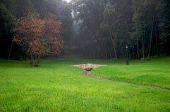 il paesaggio di autunno lascia l'albero di colore rosso della sosta fotografia stock