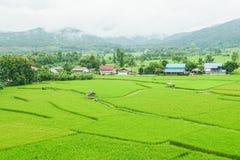 Il paesaggio di riso verde ha archivato nella stagione delle pioggie Fotografie Stock Libere da Diritti