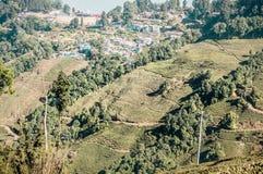 Il paesaggio di sollievo della piantagione di tè fotografie stock libere da diritti