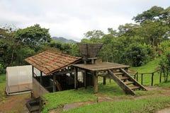 Il paesaggio ed il caffè coltivano negli altopiani di Matagalpa, Nicaragua Immagini Stock Libere da Diritti