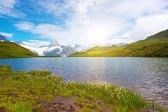 Il paesaggio fantastico con i fiori si avvicina al lago nelle alpi svizzere, Immagini Stock Libere da Diritti