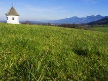 Il paesaggio idilliaco nelle alpi con i prati verdi freschi e la fioritura fiorisce Fotografie Stock Libere da Diritti