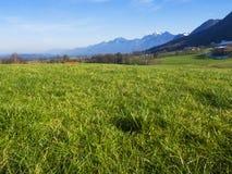 Il paesaggio idilliaco nelle alpi con i prati verdi freschi e la fioritura fiorisce Immagini Stock Libere da Diritti