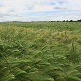 Il paesaggio, il campo ed il prato in Meclemburgo-Pomerania, circonda la d Fotografia Stock