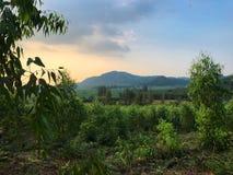Il paesaggio naturale degli alberi, i raccolti sistema e montagna Immagine Stock