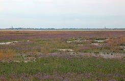 Il paesaggio naturale della località ha chiamato MESOLE con il backgro fotografie stock libere da diritti