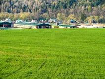 Il paesaggio nei campi della regione di Kaluga in Russia Immagini Stock Libere da Diritti
