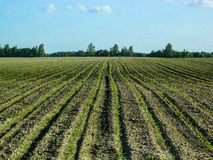 Il paesaggio nei campi della regione di Kaluga in Russia Fotografia Stock Libera da Diritti