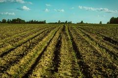Il paesaggio nei campi della regione di Kaluga in Russia Immagini Stock