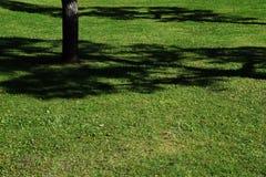 Il paesaggio nel parco Fotografia Stock