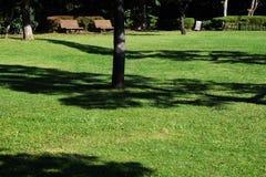 Il paesaggio nel parco Immagine Stock