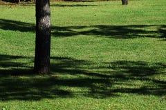 Il paesaggio nel parco Fotografie Stock Libere da Diritti