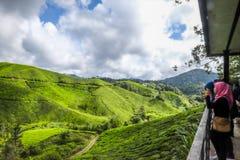 Il paesaggio più bello alla piantagione di tè in Malesia Immagini Stock Libere da Diritti