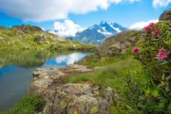 Il paesaggio pittoresco con rododendro fiorisce su un backgro Immagine Stock