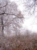 Il paesaggio ritardato di autunno Immagini Stock