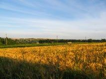 Il paesaggio rurale di estate in natura intatta Immagine Stock