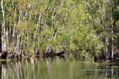 Il paesaggio selvaggio degli alberi di gomma si sviluppa su una laguna del fiume nel Queensland Immagini Stock
