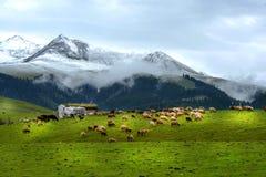 Il paesaggio in Sichuan ad ovest Fotografia Stock Libera da Diritti