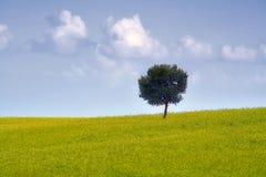 Il paesaggio siciliano Immagine Stock Libera da Diritti