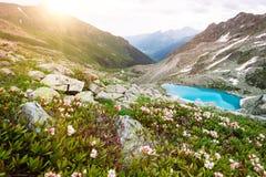 Il paesaggio soleggiato della montagna stupefacente con il lago blu ed il rododendro rosa fiorisce Immagine Stock