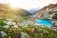 Il paesaggio soleggiato della montagna stupefacente con il lago blu ed il rododendro rosa fiorisce Fotografia Stock Libera da Diritti