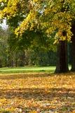 Il paesaggio variopinto di autunno Fotografia Stock