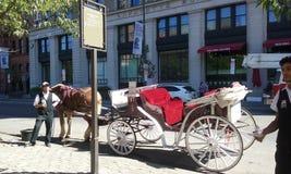 Il paese è cavallo piacevole e bello è beatifull Fotografie Stock