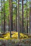 Il paese delle meraviglie del terreno boscoso Fotografia Stock Libera da Diritti