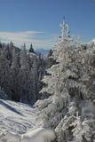 Il paese delle meraviglie di inverno alla montagna del wallberg Fotografia Stock Libera da Diritti