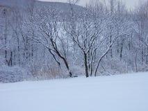 Il paese delle meraviglie di inverno di Snowy Immagine Stock