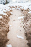 Il paese delle meraviglie di inverno di Tucson Fotografia Stock