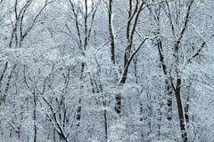 Il paese delle meraviglie di inverno - Illinois fotografia stock